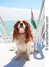 夏 休暇, 犬, 船, 旅行, ボート