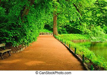 夏, 公園, 日, 大通り, 絵のよう