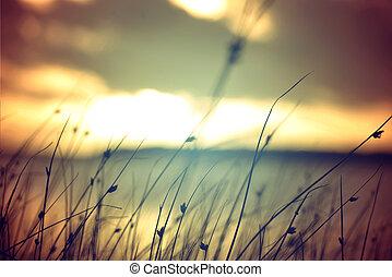 夏, 型, 色, 日没, 背景, 野生 草