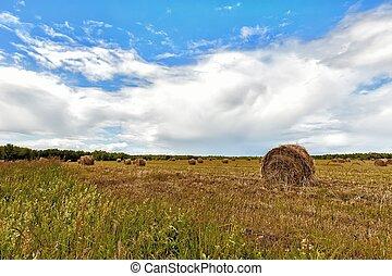 夏, 小麦, 刈られた, フィールド, 日当たりが良い, haystacks, 背景, 雲, 日