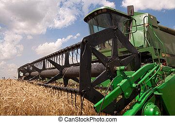 夏, 小麦, 収穫, 日当たりが良い, フィールド, コンバイン, 日