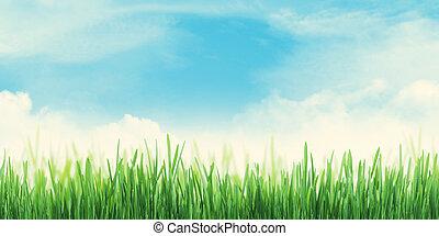 夏, 抽象的, 広く, 空, 芝生フィールド, 背景
