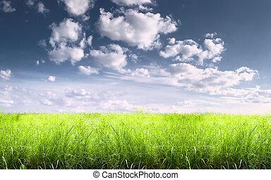 夏, 明るい, 日当たりが良い, 牧草地
