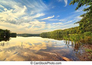 夏, 木, 湖, 日
