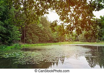 夏, 森林, 湖