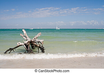 夏, 浜の 休暇