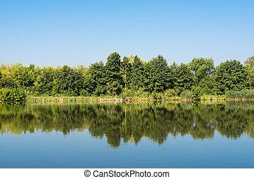 夏, 湖, 風景, 朝