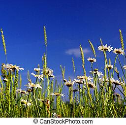 夏, 牧草地