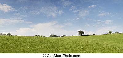 夏, 牧草地, 美しい, 緑, 日