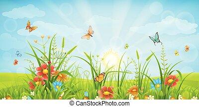 夏, 牧草地, 背景