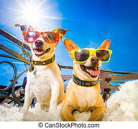 夏, 犬, バルコニー