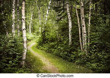 夏, 緑, 森林, 道