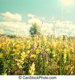 夏, 美しさ, 太陽, 抽象的, 背景, 明るい, 下に, 野生の 花