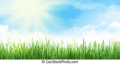 夏, 背景, 広く, 抽象的, 芝生フィールド, 空