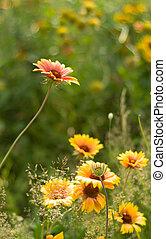 夏, 花, 背景