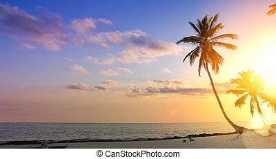 夏, 芸術, 木, 休暇, トロピカル, やし, background;, 浜, 日没