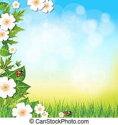 夏, 草, 春, 葉, 背景, 花, ∥あるいは∥