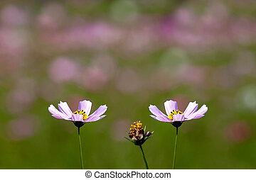 夏, 野生の花, 牧草地