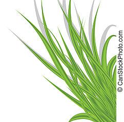 夏, 隔離された, 緑の背景, 白, 草