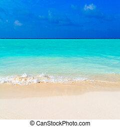 夏, 風景, の, 熱帯 浜