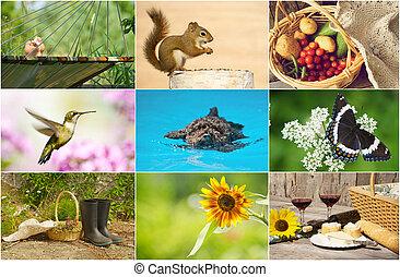 夏, collage., カラフルである, themed