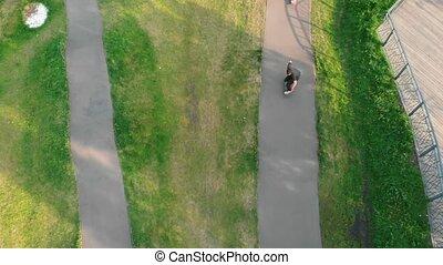 夏, daylight., 男性, 公園, 若い, 緑, skateboarding