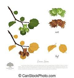 夏, filbert, 葉, autumn., ナット, ブランチ, ヘーゼルナッツ