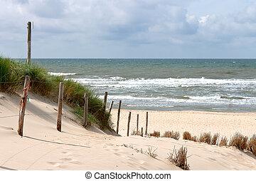 夏, netherlands, 浜