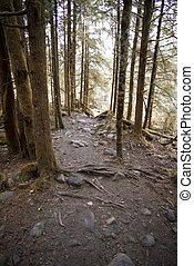 多石, 以及, 碎石路, 在, 秋季森林