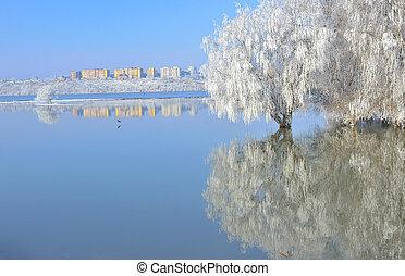多霜, 冬天樹