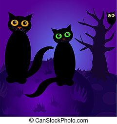夜, ネコ