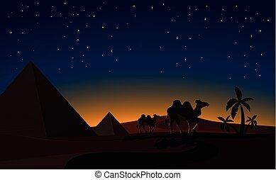 夜, 砂漠, ピラミッド, 現場, ラクダ