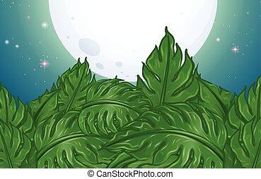 夜, 葉, フルである, 緑, 月