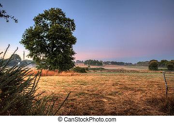 大きい木, 日の出