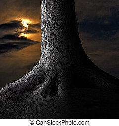 大きい木, moonshine