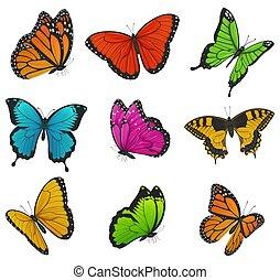 大きい, カラフルである, イラスト, ベクトル, コレクション, butterflies.