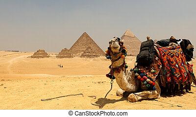 大きい ピラミッド, らくだ