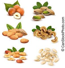 大きい, ベクトル, コレクション, 熟した, nuts.