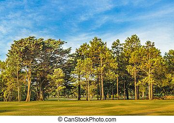 大きい, 公園, モンテビデオ, 木, ウルグアイ