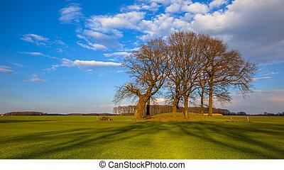 大きい, 明るい, 木, 色, 墓, 小山, tumulus
