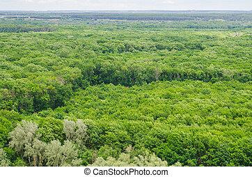 大きい, 森林, 風景, 光景