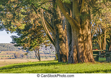 大きい, 田舎, maldonado, 木, ウルグアイ