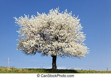 大きい, 白, 木