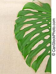 大きい, 緑の葉