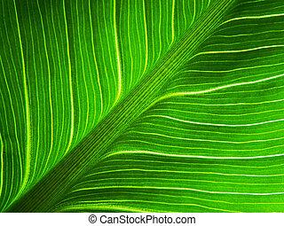 大きい, 葉, 緑, マクロ