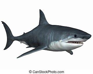 大きく 白い 鮫