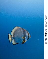 大堡礁, 澳大利亞