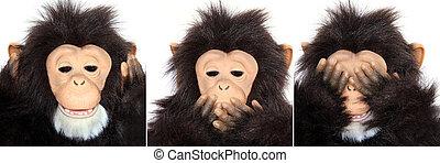 大猩猩, 肖像