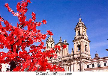 大聖堂, の, ボゴタ, コロンビア