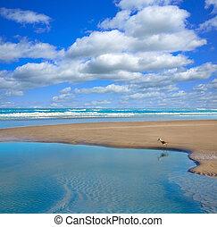 大西洋, 浜, 中に, ジャクソンビル, の, フロリダ, アメリカ